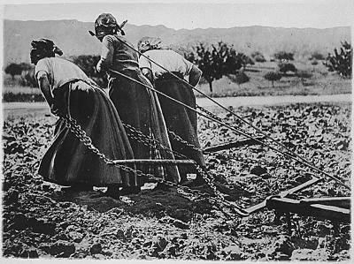 Monday Morning jobs farming